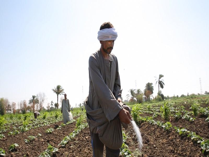 إنجازات برنامج الزراعة خلال عام 2017